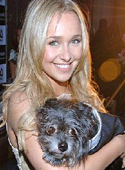 Hayden Panettiere Described Her Ideal Man